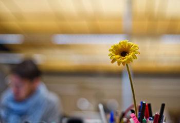 saffron-philosophy-8_v2